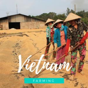 Immersion vietnam