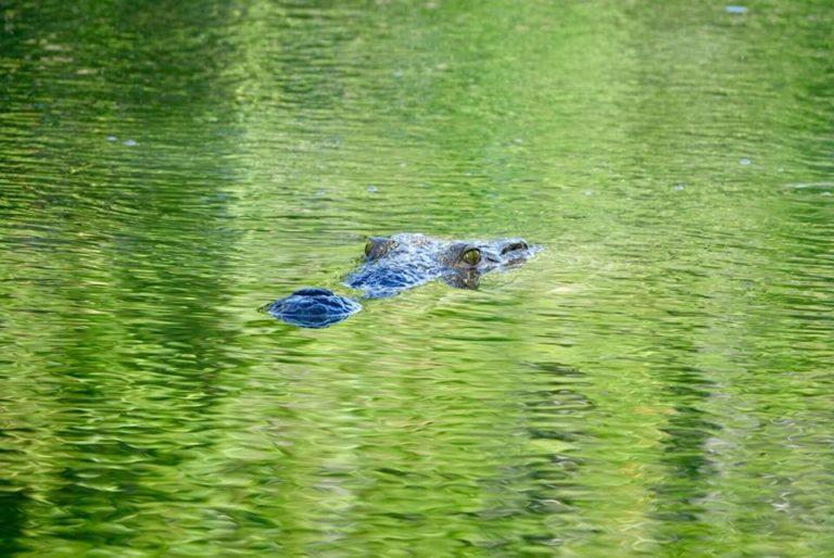tour en bateau rio lagartos
