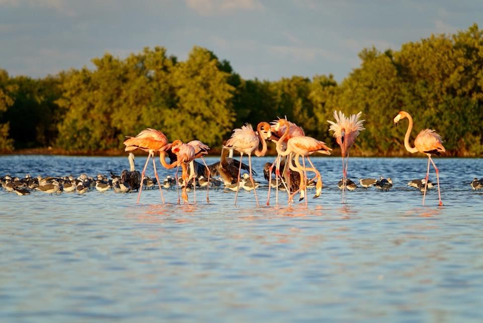 kayak rio lagartos et lagune