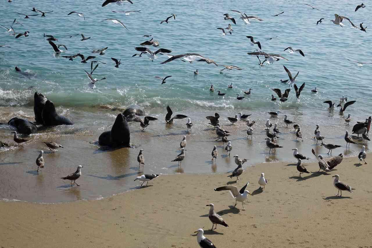 caleta portales port de peche valparaiso
