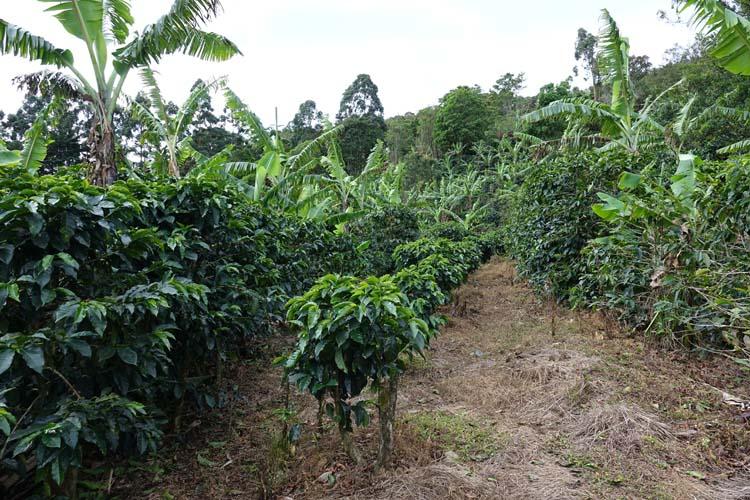 plantation verde alto costa rica