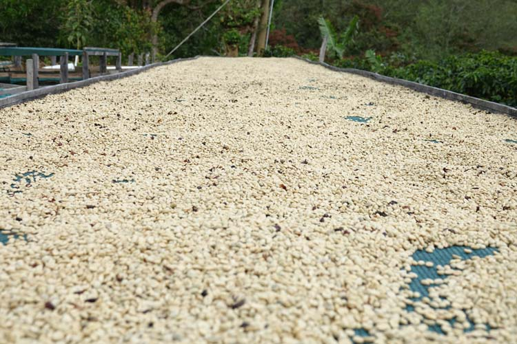 secae cafe costa rica