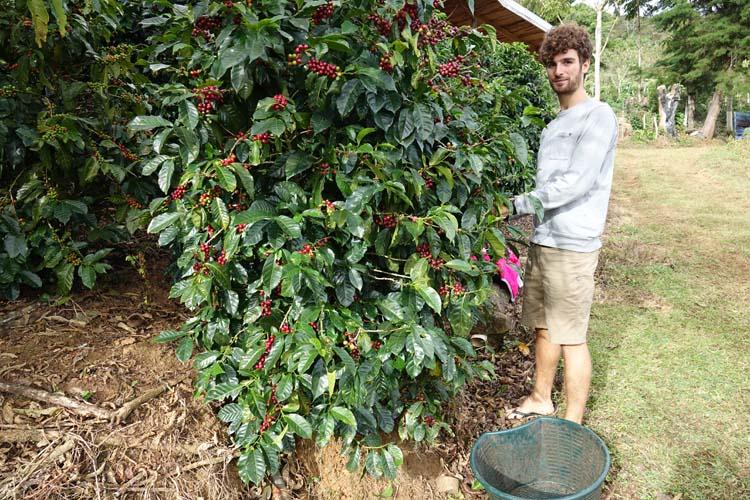 costa rica processus cafe