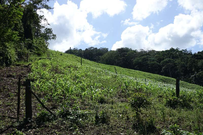 plantes et farming au costa rica