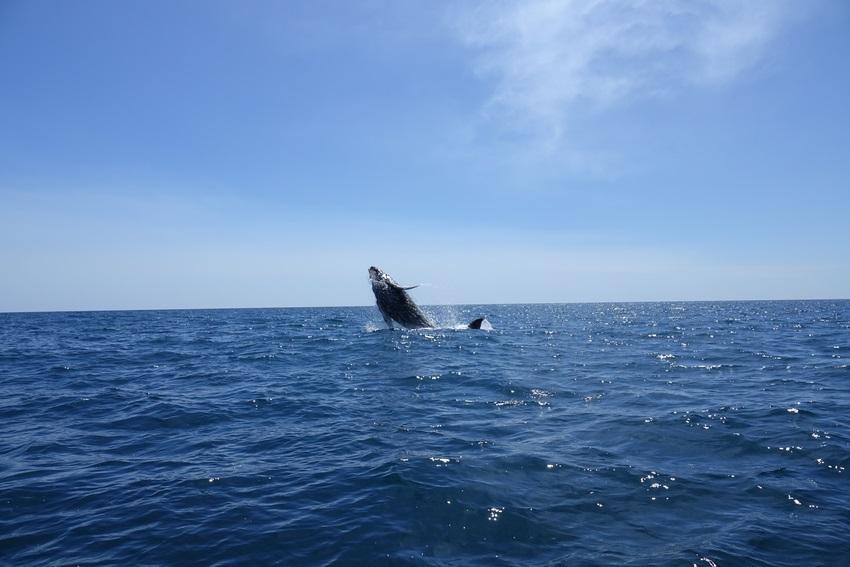 padre ramos baleine Local Xplorer