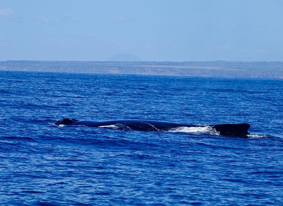baleines à bosses mere et fils a padre ramos
