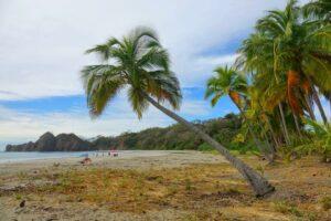 costa rica samara palmier