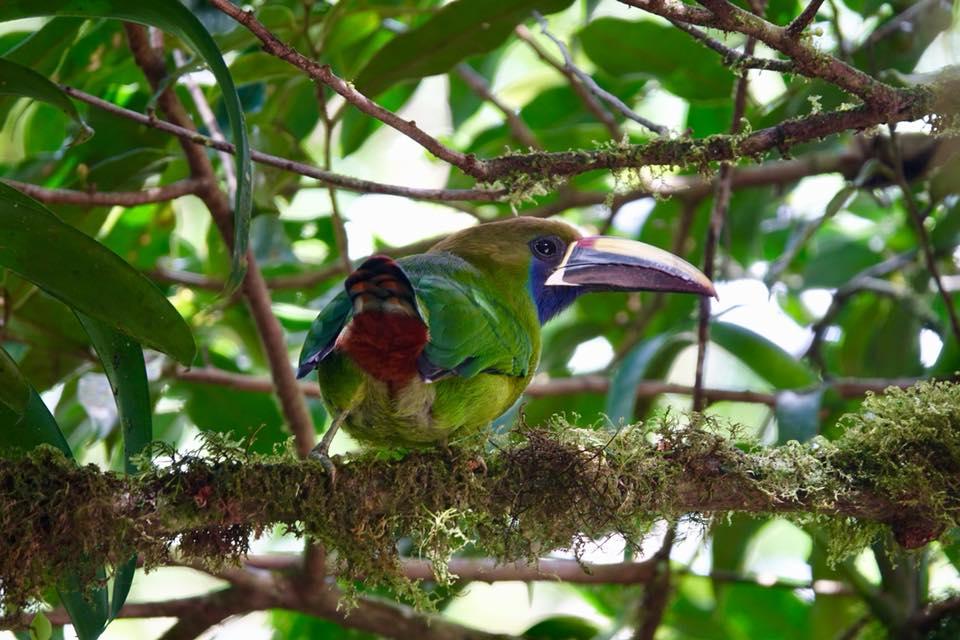 monteverde costa rica parc oiseau