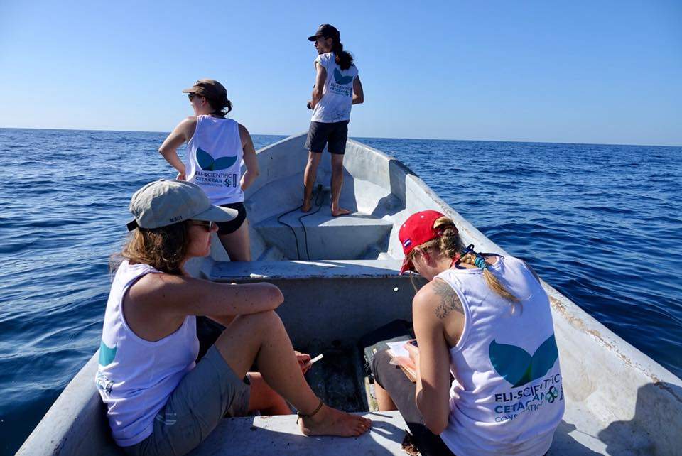 observation des baleines a padre ramos avec eli scientific