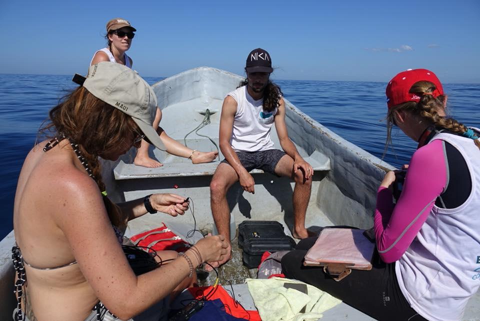 observation des baleines au Nicaraua avec eli scientific
