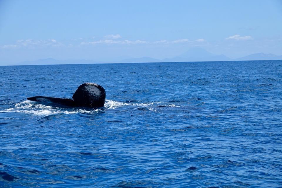 observation des baleines padre ramos