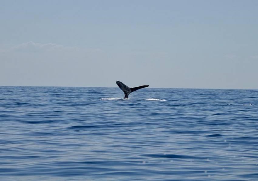 padre ramos baleine eli scientific 1 Local Xplorer