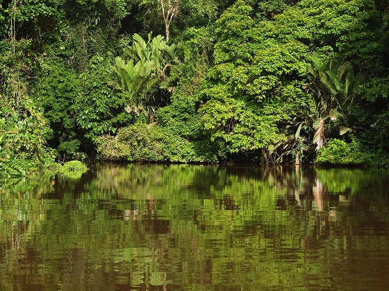 tortuguero-national-park