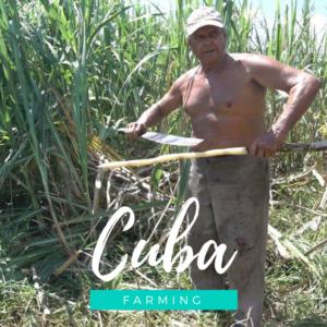 Voager à Cuba et découvrir la vie des paysans cubains