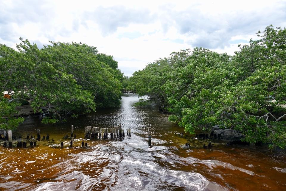 ojo de agua crocodile rio lagartos