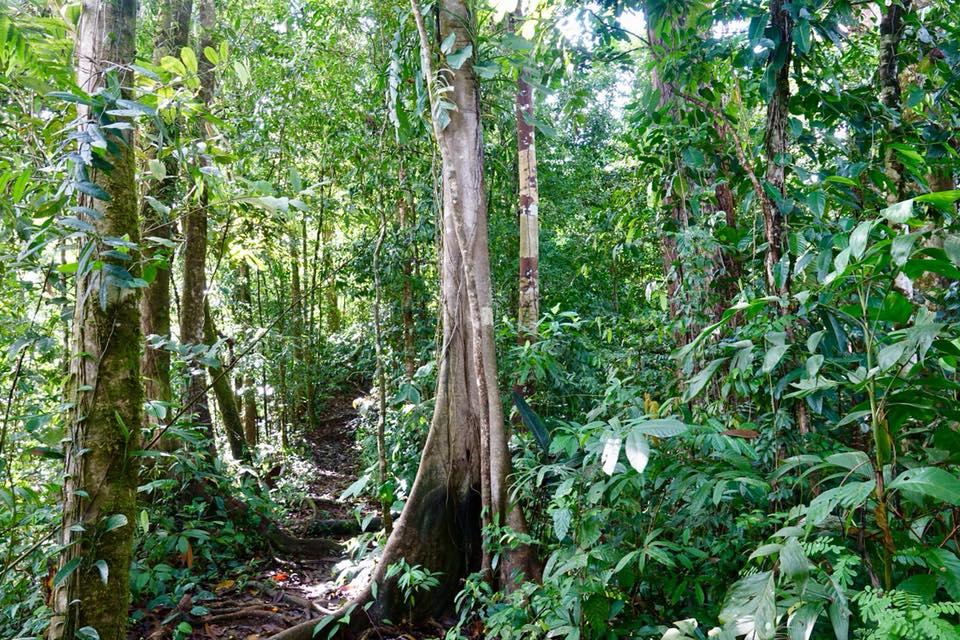 La Bolita Dos Brazos Corcovado jungle