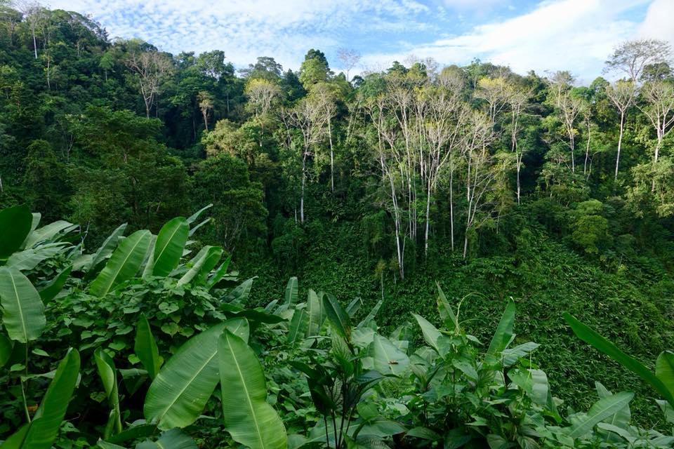 La Bolita Dos Brazos Corcovado jungle frijol