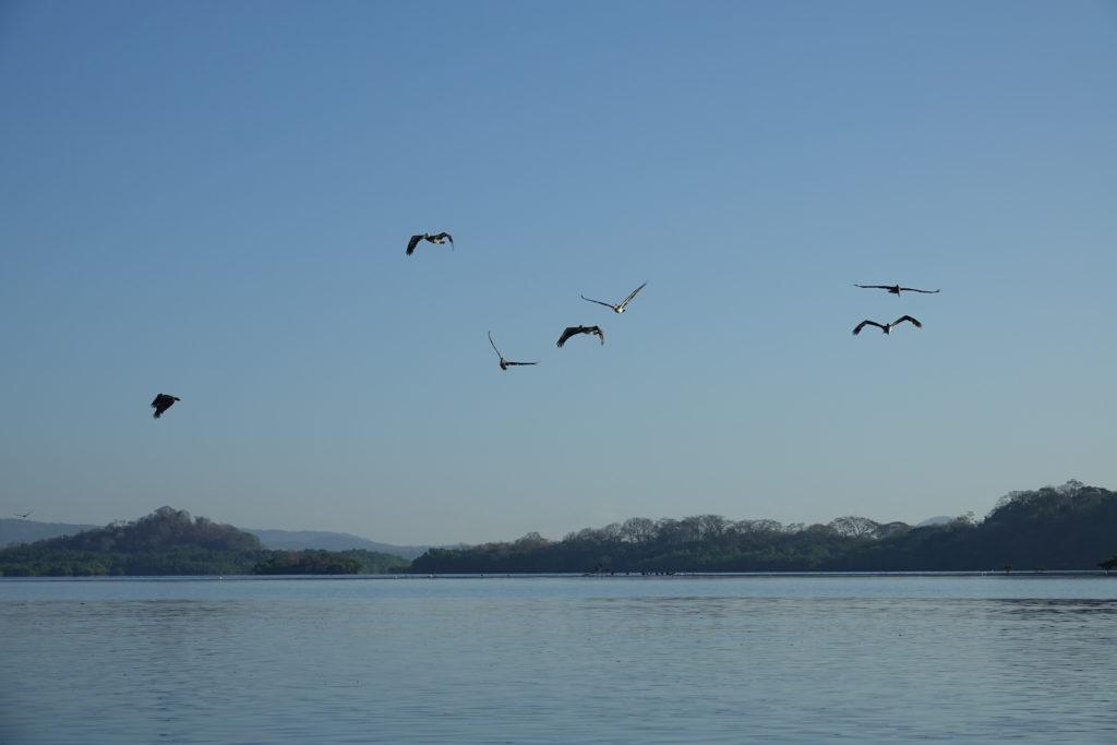 pelican padre ramos