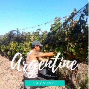 Une bodega artisanale à 100% sur la Route des vins de Mendoza